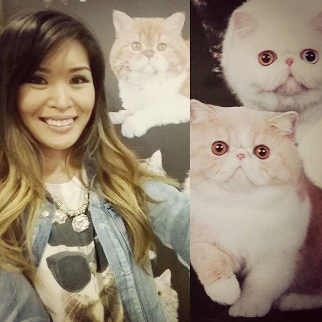 caturdays @ the cat show
